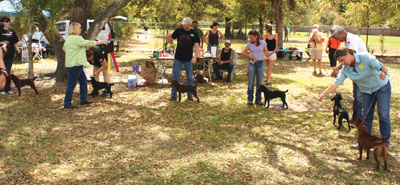 Last year's Pets in the Park drew people and dogs from all around the area. Andrea Marshall photo.