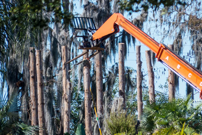 Residents in an east-side Sun City Center neighborhood report that workers have said that work on one home, along with creating what appears to be a dead forest, is related to an upcoming film by director Tim Burton. Filming will take place in the Tampa Bay area through March 7. Mitch Traphagen photo.