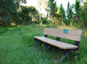 The Felts Preserve has trails to check out the wildlife and plants with benches to rest while walking. The benches are donated to the Manatee Audubon Society in memory of friends and family.