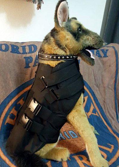 Ropa de protección para perros de la policía - Observador Noticias 2