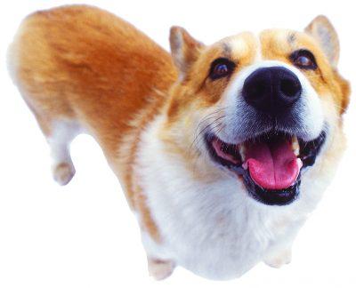 Nuevo parque del perro - Observador Noticias 1