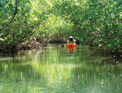 Kayaking through mangroves on Charlotte Harbor.