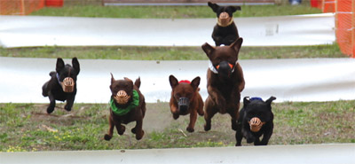 Last year's Pets in the Park event featured racing and drew around 150 people.