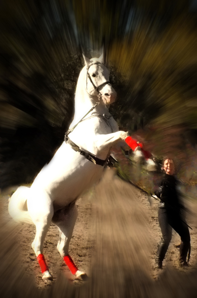 """Pat Jones received a gold for """"Horsing Around."""""""