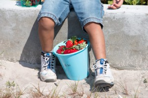 wimaumaelementary_strawberries4