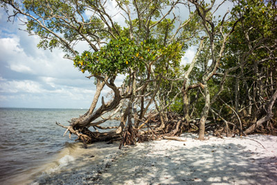 Although South Hillsborough is indeed blessed with public spaces, such as E.G. Simmons Park, the crown jewel of the Tampa Bay coastline, there aren't many gathering places to meet the neighbors. In response, virtual communities are springing up online. Mitch Traphagen photo.