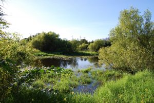 Volunteers cleaned out the two ponds at Felts Preserve during the first three years of ownership, removing around 225 used tires.