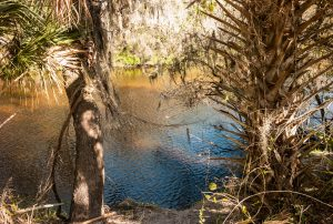 The Little Manatee River State Park offers visitors a quiet and beautiful respite from an increasingly hectic metropolitan area to Florida's natural beauty.