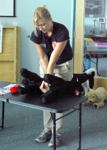 Instructor Pam Farinas, owner of Precious Life Paws, demonstrates how to apply compressions while performing CPR on a dog or cat.
