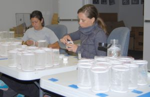 Ambyr Marsicano, education specialist, on the left, and Katie Williams, junior biologist, at the Manatee County Mosquito Control District, build traps for mosquitos to be studied.