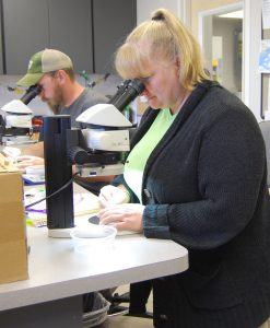 Entomologist Barbra Bayer, in the foreground, and Israel Stinton, entomology technician, count and identify mosquitos in the lab at the Manatee County Mosquito Control District offices.