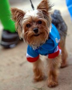 PAM VASQUEZ PHOTO The ABC Superhero Fun Run welcomes leashed pets to walk along with their families. Superhero costumes are encouraged.