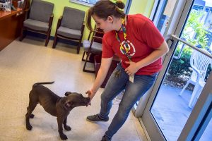 """Shelter Operations Manager Maddalene """"Maddie"""" Ferguson gives him treats in the shelter's lobby and adoption area."""