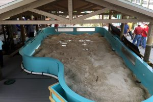 This new 10,000-gallon, 600-square-foot touch tank will hold about 15 South Atlantic and cow nose rays, once it's completed by late November. The rays will come from Tropicana Field, where they live during the summer. LOIS KINDLE PHOTO