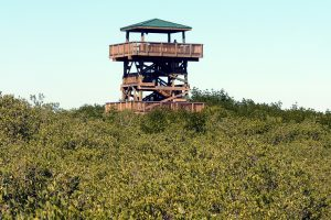 One of the popular features at the Manatee Viewing Center is a 40-foot observation tower overlooking its 50-acre campus and Tampa Bay. TAMPA ELECTRIC PHOTO